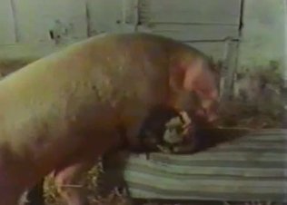 Passionate pig fucking a MILF