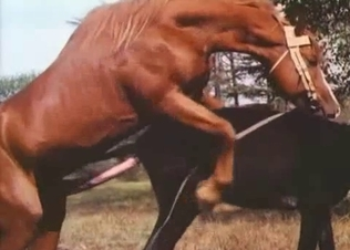 Two nice horses having amazing doggy style sex